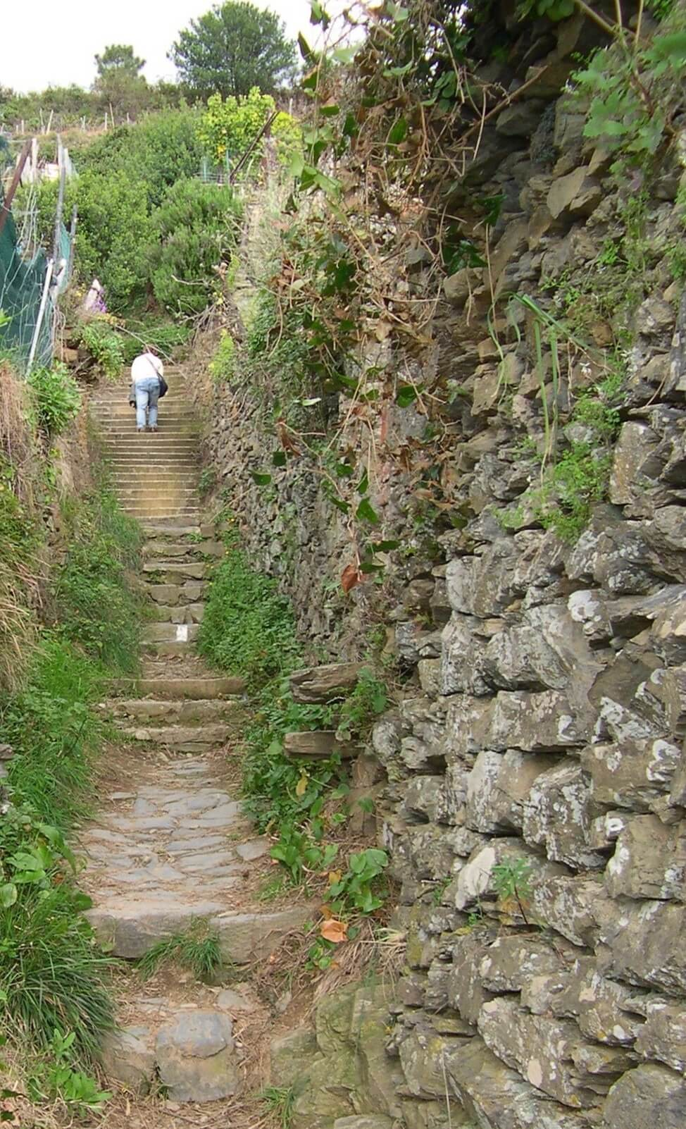 conquering steps in the Cinque Terre National Park, Italy