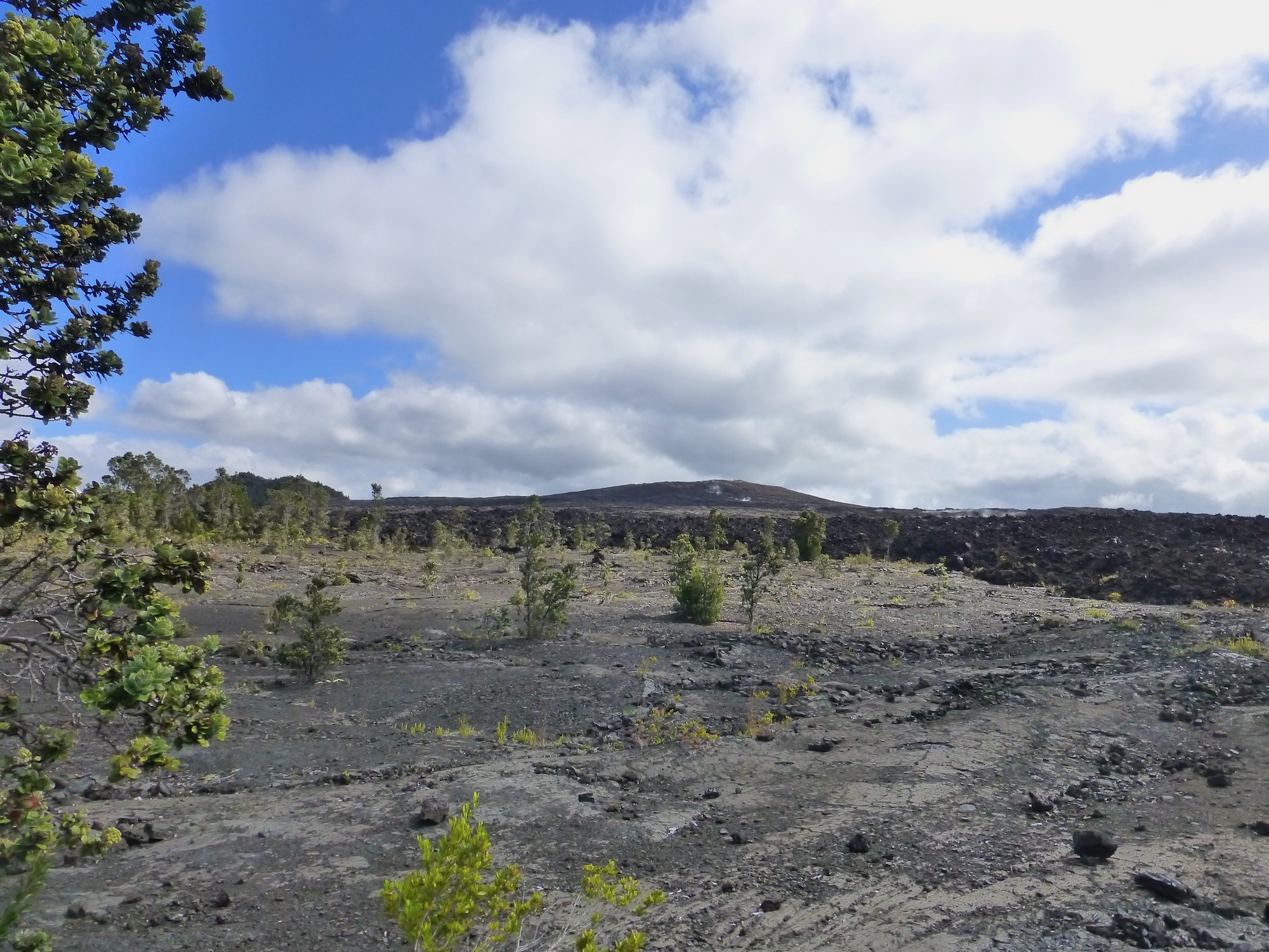 vista of lava fields with spots of greenery in Hawaii