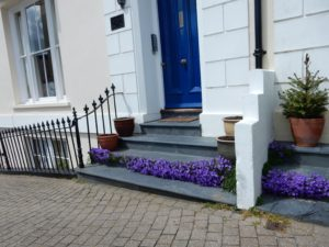 Purple flowers on Steps